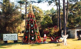 Florida Christmas.Weird Florida